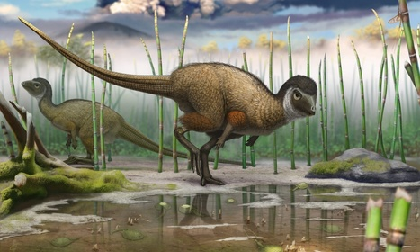 Most dinosaurs had scales, not feathers, fossil analysis concludes | Amazing Science | Scoop.it