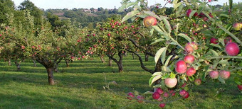 RSC e-Assessment: Assessment in the Apple orchard | e-Assessment in Further and Higher Education | Scoop.it