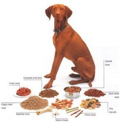 Healthy Organic Food, Treats, Vitamins & Glucosamine for Dogs   Dog Health Care   Scoop.it
