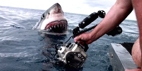 YIKES! Photographer Gets Up Close And Personal With A Great White | Xposed | Scoop.it