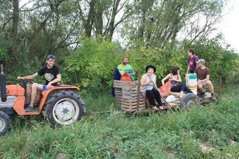 Organic Farming Taking Off in Poland … Slowly | Inter Press Service | Sustain Our Earth | Scoop.it