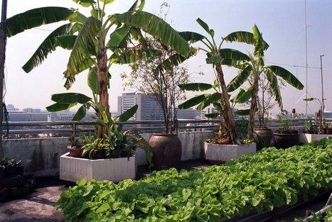 Du vert à tous les étages, l'agriculture urbaine à Bangkok | biodiversité en milieu urbain | Scoop.it