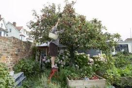 Organic Gardening: Growth Control for Efficient Gardening of Vegetables | Organic Gardening Blog | Scoop.it
