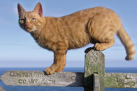 Cat Walk for Cat Lovers | Travel & Entertainment News | Scoop.it