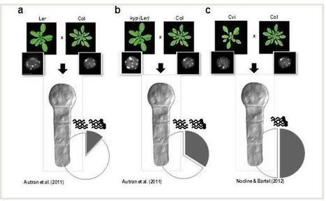 Parental contributions to the transcriptome of early plant embryos | Current Comments | Plant Genomics | Scoop.it