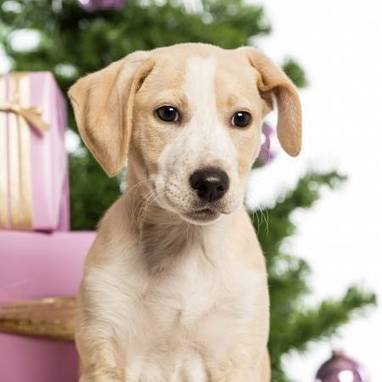 Burgess Pet Care » Blog Archive » Don't make a dog's dinner of your pets' health this Christmas | Dogs | Scoop.it