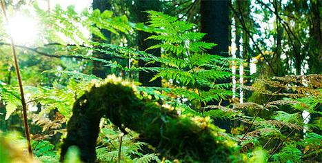European Forest Institute - Home | Material para FB de Ecojesuit | Scoop.it