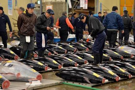 Japan to halve tuna catch in Northern Pacific | Sustain Our Earth | Scoop.it