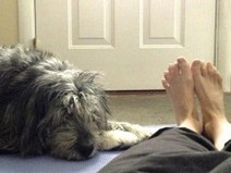 Yoga - Gone to the Dogs! | Life Harmony | Scoop.it