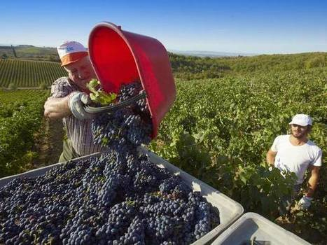 When is a wine made in Piedmont not a Piemonte wine? When EU rules make Italian vineyards invisible   Grande Passione   Scoop.it