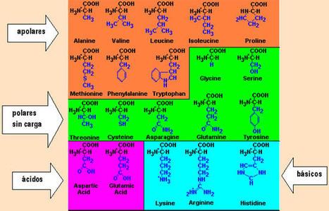 BIOMOLECULAS   Ingeniería biomolecular   Scoop.it