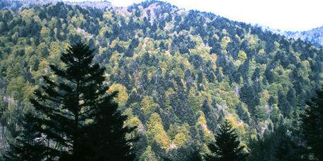 Les forêts d'Europe ne tempèrent pas le réchauffement climatique | EntomoNews | Scoop.it