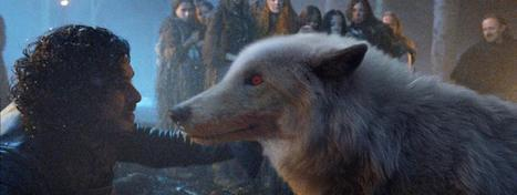 Game of Thrones, le loup de Jon Snow a vraiment existé | Loup | Scoop.it