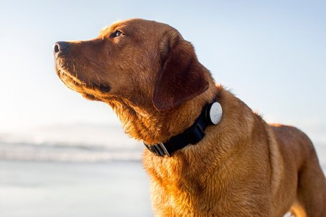 Fitness Gadgets … for Your Dog - Daily Beast | Dog Lovers | Scoop.it
