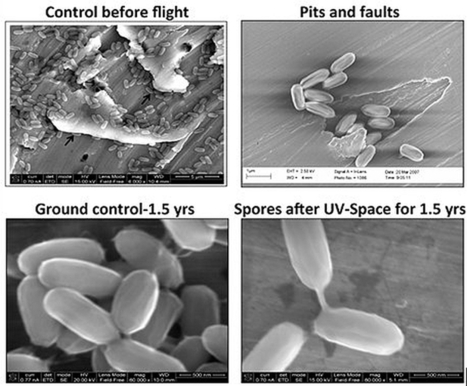 Bacteria from Earth can easily colonize Mars according to research on the International Space Station | Amazing Science | Scoop.it