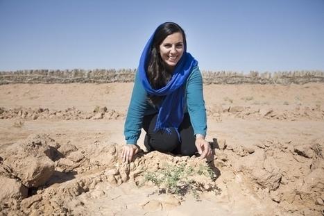 Acacias for All : des acacias pour lutter contre la désertification   Innovations francophones   Scoop.it