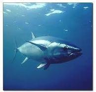 Contaminación del pescado por mercurio | Agua | Scoop.it