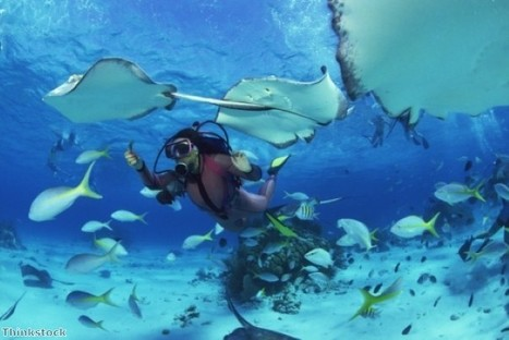 Belize: home to the world's second-largest barrier reef   Belize in Social Media   Scoop.it