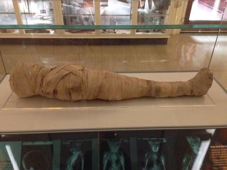 The Bio Bank has reached 700 mummies! | Egiptología | Scoop.it