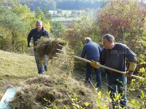 Chantier nature au lieu-dit Im Berg à Tagolsheim | Alsace Actu | Scoop.it