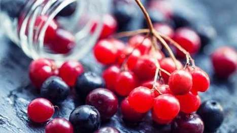 Cranberries crush bacteria's communication networks | Longevity science | Scoop.it