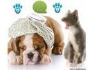 Pet clinic in Rohini - Classified Ad   Pet care   Scoop.it