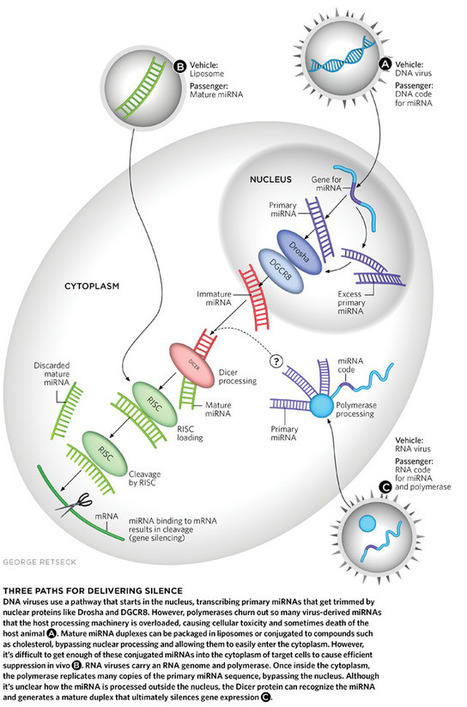 Delivering Silence | The Scientist | Virology News | Scoop.it