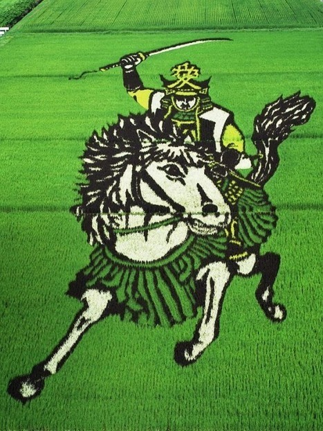 Small Japanese Village Turns Rice Paddies into Awe-Inspiring Works of Art | Strange days indeed... | Scoop.it