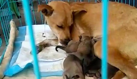 Dog Gives Birth Right As She's Rescued From Slaughter Truck | Compassion in Action | Scoop.it