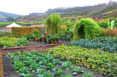 Plant These Vegetables To Help the Environment - CleanTechies | Sustainable Futures | Scoop.it
