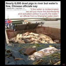 "CHINA BUYS BIGGEST USA CAFO HOG FACTORY FARM ""SMITHFIELD"" : CHINA'S RIVER OF DEAD PIGS - 17,000 OF THEM 