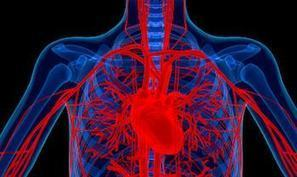 'Largest ever' trial of adult stem cells in heart attack patients begins   Stem Cells Repair Injured Athletes   Scoop.it