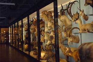 £150000 collaborations explore the Internet of Things - University of Bristol | Taxidermy anthropology | Scoop.it