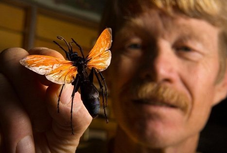 This Guy Got Himself Stung 1,000 Times For Science—Here's What He Learned | CALS in the News | Scoop.it