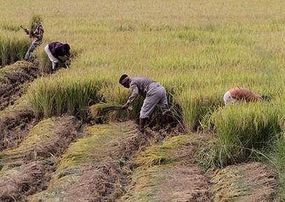 India pushes to change WTO subsidy rules so it can stockpile food | A2 Geography | Scoop.it