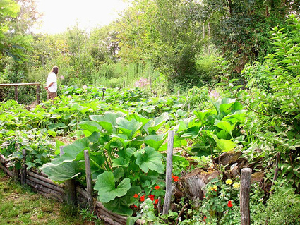 Permaculture and the myth of scarcity | Sustainable Futures | Scoop.it