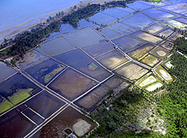 Shrimp Farms' Tainted Legacy Is Target of Certification Drive by Marc Gunther: Yale Environment 360 | IB Geography (Diploma Programme) | Scoop.it
