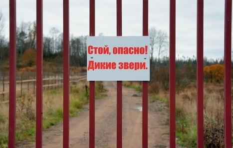 Заборобой   Octivizm (activism + optimism)   Scoop.it