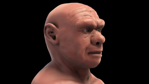 3D visual forensic facial reconstruction of a Neanderthal face in front of your eyes