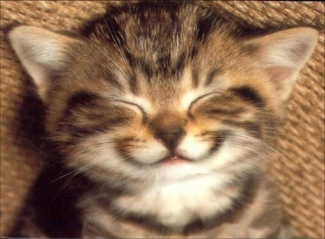 just smile drôle | Chatons | Scoop.it