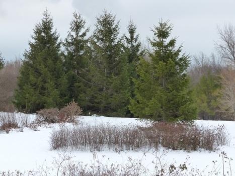 Photo de paysage enneigé - Québec - Canada - Hiver 2013 - 2014   Faaxaal Forum Photos gratuite Faune et Flore   Scoop.it