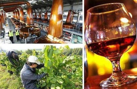 Cognac élargit sa vigne en avalant du muscadet | Le Vin et + encore | Scoop.it