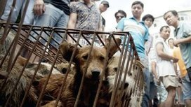 Dog Meat Festival in China Inspires Hashtag Protest Around the World | LibertyE Global Renaissance | Scoop.it