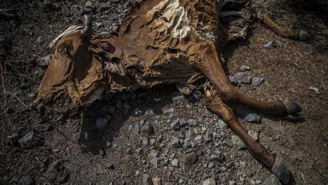 Amérique centrale: la sécheresse tue le bétail et détruit les récoltes - RFI | Nouvelles d'Amérique centrale | Scoop.it