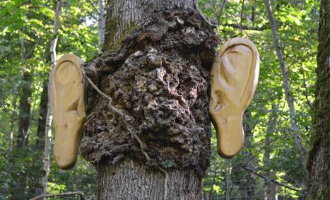 Sentier Azaret - loisirs en forêt - Parcours sonores - parc Orlu Ariège Pyrénées | DESARTSONNANTS - CRÉATION SONORE ET ENVIRONNEMENT - ENVIRONMENTAL SOUND ART - PAYSAGES ET ECOLOGIE SONORE | Scoop.it