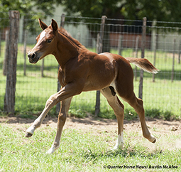 Guess Whose Clone Is On The Ground?  [Quarter Horse News] | Horse and Rider Awareness | Scoop.it