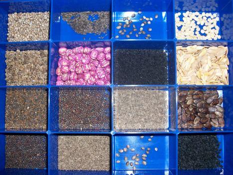 Produire ses propres semences | écologie et nature | Scoop.it