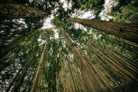 Ecosia, le moteur de recherche qui plante des arbres | Mediapeps | Scoop.it