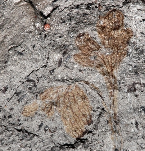 This Could Be the Oldest Flowering Plant Ever Found in North America | Fragments of Science | Scoop.it