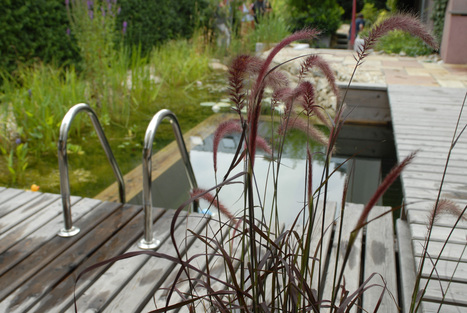 Avec BIOTOP, les petits jardins aussi ont le droit à leur espace de baignade naturelle, petit mais tout aussi séduisant | BIOTOP - Baignades & piscines  ecologiques - Jardin | Scoop.it